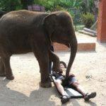 Sloní masáž
