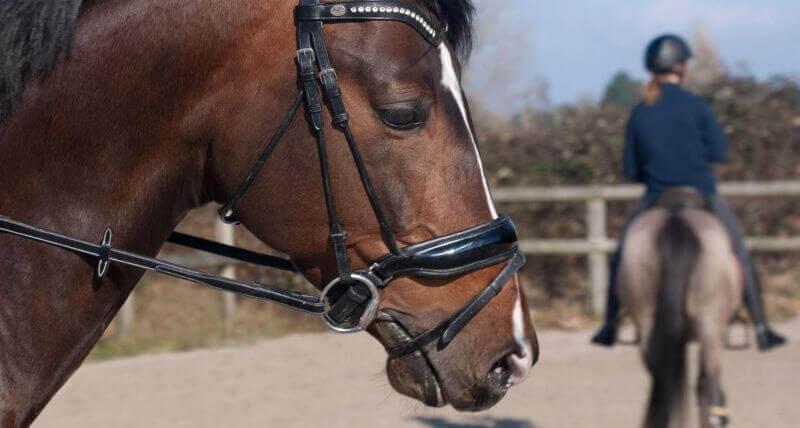 jízda na koni na karlštejně